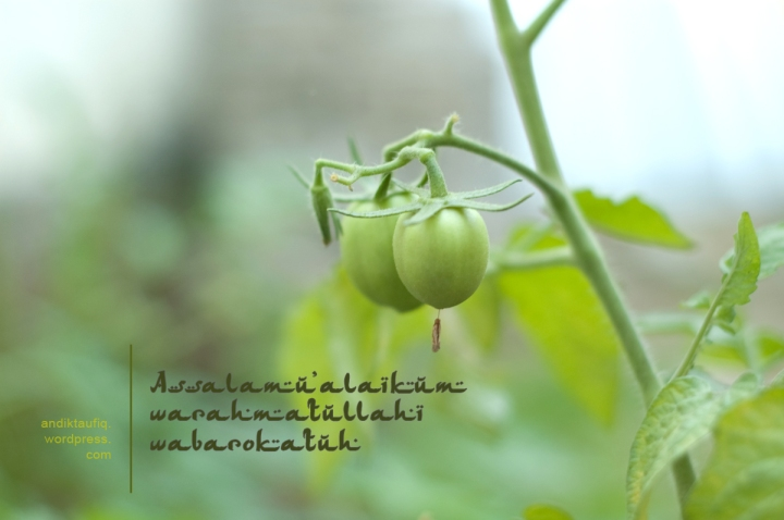 salam assalamu'alaikum warahmatullahi wabarakatuh